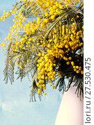 Купить «Spring nature still life - mimosa flowers in the white vase», фото № 27530475, снято 9 марта 2016 г. (c) Зезелина Марина / Фотобанк Лори
