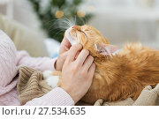 Купить «close up of owner stroking red cat in bed at home», фото № 27534635, снято 15 ноября 2017 г. (c) Syda Productions / Фотобанк Лори