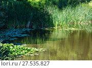 Купить «Small summer lake surface with green reflections», фото № 27535827, снято 30 июля 2017 г. (c) Юрий Брыкайло / Фотобанк Лори