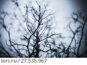 Купить «Leafless trees branches background», фото № 27535967, снято 15 сентября 2017 г. (c) EugeneSergeev / Фотобанк Лори