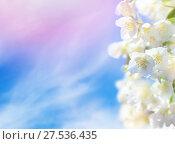Купить «Жасмин на фоне неба», фото № 27536435, снято 16 июня 2012 г. (c) Икан Леонид / Фотобанк Лори