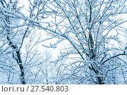Купить «Заснеженные деревья за окном. Последствия сильного снегопада в Москве», фото № 27540803, снято 31 января 2018 г. (c) Алёшина Оксана / Фотобанк Лори