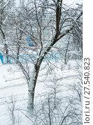 Купить «Заснеженное дерево за окном. Последствия сильного снегопада в Москве», фото № 27540823, снято 31 января 2018 г. (c) Алёшина Оксана / Фотобанк Лори