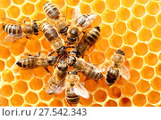 Dancing bees in a circle. Стоковое фото, фотограф Zoonar/Trischberger / easy Fotostock / Фотобанк Лори