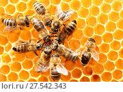 Купить «Dancing bees in a circle», фото № 27542343, снято 28 июля 2020 г. (c) easy Fotostock / Фотобанк Лори