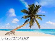 Tulum Caribbean turquoise beach palm tree in Riviera Maya of Mayan Mexico. Стоковое фото, фотограф Tono Balaguer / easy Fotostock / Фотобанк Лори