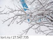 Купить «Ветки деревьев покрытые толстым слоем снега в сильный снегопад. Московская зима», фото № 27547735, снято 31 января 2018 г. (c) Алёшина Оксана / Фотобанк Лори