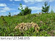 Купить «Нора крота на садовом участке», фото № 27548015, снято 22 мая 2017 г. (c) Анатолий Заводсков / Фотобанк Лори
