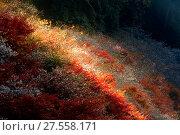 Купить «Nagoya, Obara Sakura in autumn», фото № 27558171, снято 25 июня 2019 г. (c) easy Fotostock / Фотобанк Лори