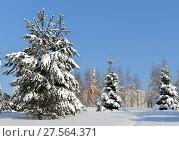Заснеженная Москва. Митинский ландшафтный парк после снегопада. Ели в снегу на фоне церкви (2018 год). Стоковое фото, фотограф Валерия Попова / Фотобанк Лори