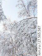 Купить «Деревья в снегу. Москва. Фрагмент», фото № 27565587, снято 31 января 2018 г. (c) Алёшина Оксана / Фотобанк Лори