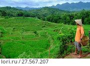 Купить «Farmer wearing a conical hat looking out over rice paddy terraces, Mai Chau, Hoa Binh, Vietnam, Indochina, Southeast Asia, Asia», фото № 27567207, снято 9 сентября 2017 г. (c) age Fotostock / Фотобанк Лори