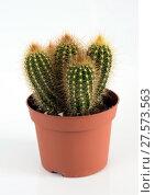 Купить «Cactus in pot on white background.», фото № 27573563, снято 3 февраля 2018 г. (c) Володина Ольга / Фотобанк Лори