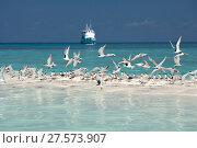 Купить «Greater crested terns (Thalasseus bergii) on a strip of sand with the MV Atlantis Azores liveaboard boat  in distance,  Tubbataha Reef Natural Park, UNESCO...», фото № 27573907, снято 25 апреля 2018 г. (c) Nature Picture Library / Фотобанк Лори