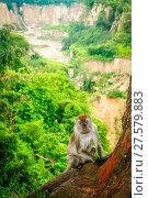 Купить «Indonesian Macaque monkey», фото № 27579883, снято 23 марта 2019 г. (c) easy Fotostock / Фотобанк Лори