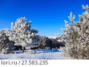 Купить «snowy trees», фото № 27583235, снято 26 июня 2019 г. (c) PantherMedia / Фотобанк Лори