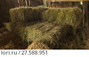 Купить «Hay bale in the shed», видеоролик № 27588951, снято 14 декабря 2017 г. (c) Илья Шаматура / Фотобанк Лори