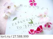 Купить «Godetia flowers also known as Farewell to Spring», фото № 27588999, снято 23 марта 2018 г. (c) PantherMedia / Фотобанк Лори