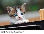 Купить «cat  siting in the box», фото № 27592627, снято 18 февраля 2019 г. (c) PantherMedia / Фотобанк Лори