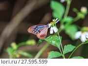 Купить «Beautiful Butterfly in forest», фото № 27595599, снято 22 марта 2019 г. (c) PantherMedia / Фотобанк Лори
