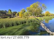 Купить «Río Manzanares, Parque regional, Madrid. Spain», фото № 27600779, снято 22 января 2019 г. (c) age Fotostock / Фотобанк Лори