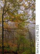 Купить «Autumn forest Leaves», фото № 27616255, снято 17 июня 2019 г. (c) PantherMedia / Фотобанк Лори