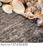 Купить «Sea shells on wooden background», фото № 27616835, снято 23 апреля 2019 г. (c) PantherMedia / Фотобанк Лори
