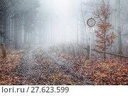 Купить «tree haze resin beech forest», фото № 27623599, снято 22 мая 2019 г. (c) PantherMedia / Фотобанк Лори