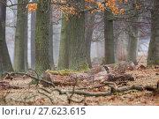 Купить «tree haze snag resin beech», фото № 27623615, снято 22 мая 2019 г. (c) PantherMedia / Фотобанк Лори