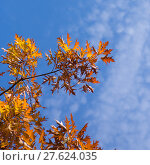 Купить «leaves autumn trees climatic warm colors», фото № 27624035, снято 24 апреля 2019 г. (c) PantherMedia / Фотобанк Лори