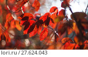 Купить «leaves autumn trees climatic warm colors», фото № 27624043, снято 24 апреля 2019 г. (c) PantherMedia / Фотобанк Лори