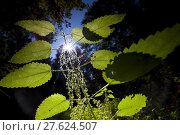 Купить «counter light blauer himmel grüne», фото № 27624507, снято 19 октября 2019 г. (c) PantherMedia / Фотобанк Лори