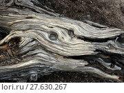 Купить «wood usa weatherworn holzstück joshua», фото № 27630267, снято 19 марта 2019 г. (c) PantherMedia / Фотобанк Лори