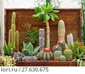 Купить «Cactus plants», фото № 27630675, снято 14 декабря 2018 г. (c) PantherMedia / Фотобанк Лори