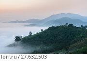 Купить «Sunrise with sea of fog above Mekong river in Nong Khai Province, Thailand», фото № 27632503, снято 23 августа 2019 г. (c) PantherMedia / Фотобанк Лори