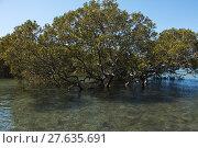 Купить «mangrove forest in australia», фото № 27635691, снято 22 июля 2019 г. (c) PantherMedia / Фотобанк Лори
