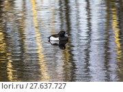 Купить «nature water day outside wildlife», фото № 27637727, снято 19 октября 2018 г. (c) PantherMedia / Фотобанк Лори