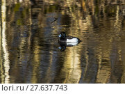 Купить «nature water day outside wildlife», фото № 27637743, снято 19 октября 2018 г. (c) PantherMedia / Фотобанк Лори