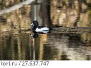 Купить «nature water day outside wildlife», фото № 27637747, снято 23 ноября 2019 г. (c) PantherMedia / Фотобанк Лори