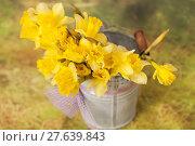 Купить «Yellow daffodil flowers in bucket», фото № 27639843, снято 21 февраля 2019 г. (c) PantherMedia / Фотобанк Лори