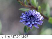 Купить «nature blue plant flower blossom», фото № 27641939, снято 24 мая 2019 г. (c) PantherMedia / Фотобанк Лори