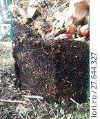 Купить «living in the compost heap», фото № 27644327, снято 27 марта 2019 г. (c) PantherMedia / Фотобанк Лори