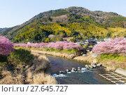 Купить «Sakura and river», фото № 27645727, снято 23 апреля 2018 г. (c) PantherMedia / Фотобанк Лори