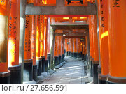 Купить «Long row of historic torri gates in Japan», фото № 27656591, снято 25 июня 2019 г. (c) PantherMedia / Фотобанк Лори