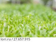 Купить «Young green oak in organic farm», фото № 27657915, снято 18 марта 2018 г. (c) PantherMedia / Фотобанк Лори