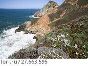 Купить «Devil's Slide sheer cliffs, coastal promontory, San Mateo County, California», фото № 27663595, снято 24 августа 2019 г. (c) PantherMedia / Фотобанк Лори