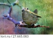Купить «sparrow in front of colorful background», фото № 27665083, снято 20 марта 2019 г. (c) PantherMedia / Фотобанк Лори