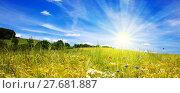 Купить «Sunset in German summer meadow.», фото № 27681887, снято 22 сентября 2019 г. (c) PantherMedia / Фотобанк Лори