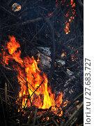 Купить «hot branch fire flame burn», фото № 27683727, снято 27 мая 2019 г. (c) PantherMedia / Фотобанк Лори