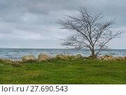 Купить «Lonely Leafless Tree at Seashore», фото № 27690543, снято 17 октября 2018 г. (c) PantherMedia / Фотобанк Лори